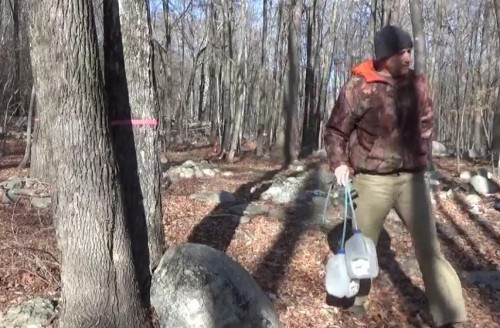 Tapping Maple Trees In January